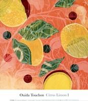 Citrus Limon I (SM.) Fine Art Print