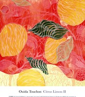Citrus Limon II (SM.) Fine Art Print
