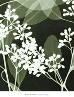 Eucalyptus Buds I Fine Art Print