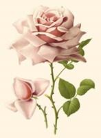 Victorian Rose I Fine Art Print