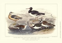 Oyster Catchers Fine Art Print