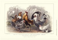Roosters & Hens Fine Art Print