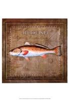 Ocean Fish IX Framed Print