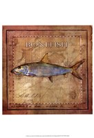 Ocean Fish IV Framed Print