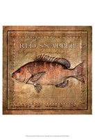 Ocean Fish VII Fine Art Print