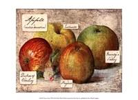 Fresco Fruit VIII Fine Art Print