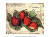 Fresco Fruit XII Fine Art Print