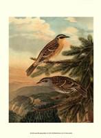 Small Woodland Birds I Framed Print