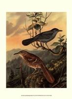 Small Woodland Birds IV Framed Print