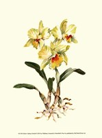 Yellow Cattleya Orchid Fine Art Print