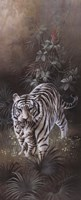 White Tigers Framed Print