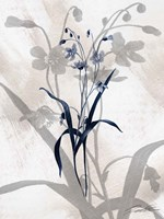 Indigo Bloom III Framed Print