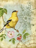 Songbird Sketchbook III Fine Art Print
