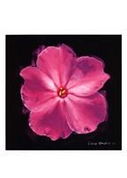 Vibrant Flower III Framed Print