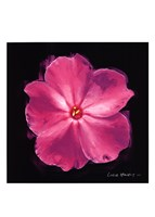 Vibrant Flower III Fine Art Print