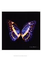 Techno Butterfly II Fine Art Print