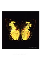 Techno Butterfly I Fine Art Print