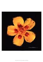 Vibrant Flower X Framed Print
