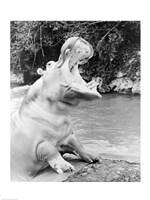 Hippopotamus yawning Fine Art Print