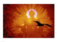 Image of a flower and bird superimposed on a person meditating Framed Print