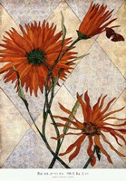 Orange Daises Fine Art Print