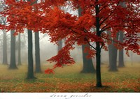 Autumn Mist II Framed Print