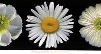 White Diptych Fine Art Print