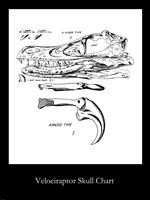 Velociraptor Skull Chart Framed Print