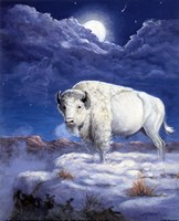 White Buffalo Fine Art Print