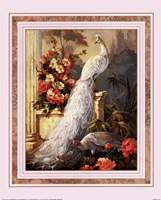 Peacocks, Column Fine Art Print