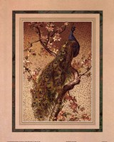 Peacock And Dogwood Fine Art Print