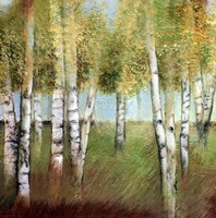 BIRCH WOODS II Fine Art Print