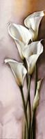 Callas Gracieux II Fine Art Print
