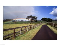 Rainbow over pineapple fields, Makawao, Maui, Hawaii, USA Fine Art Print
