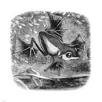 Wallace Frog Fine Art Print