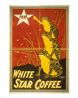White Star Coffee Frogs Framed Print