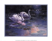 Swans and Waterfall Fine Art Print
