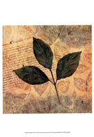 Antiqued Leaves I Fine Art Print