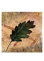 Antiqued Leaves II Fine Art Print
