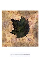 Antiqued Leaves III Fine Art Print