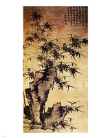 Xia Chang-Bamboo and Stone Fine Art Print