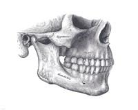 Skull Diagram Fine Art Print