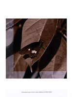 Butterfly Study VI Framed Print