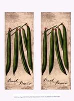 Fresco Veggies XIII Fine Art Print