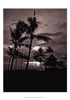 Palms At Night I Fine Art Print