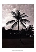 Palms At Night II Fine Art Print