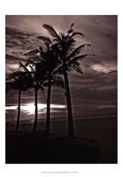 Palms At Night III Fine Art Print