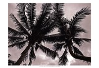 Palms At Night V Fine Art Print