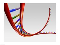 Close-up of a human DNA structure Fine Art Print