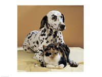 Dalmatian and Cat Framed Print